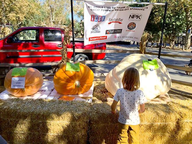 Irvine Park Railroad Pumpkin Patch Contest