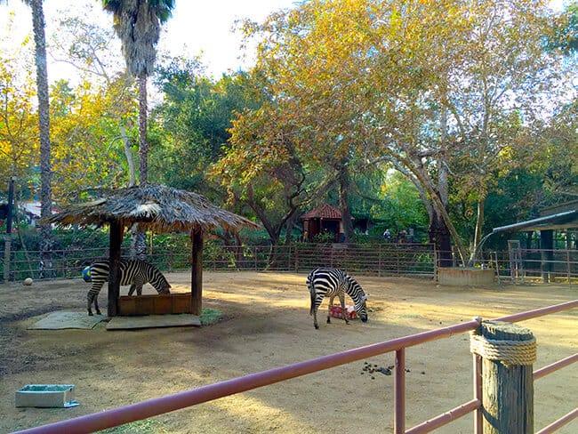 zebras-at-rancho-las-lomas