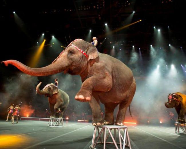 ringling_bros_circus_elephants