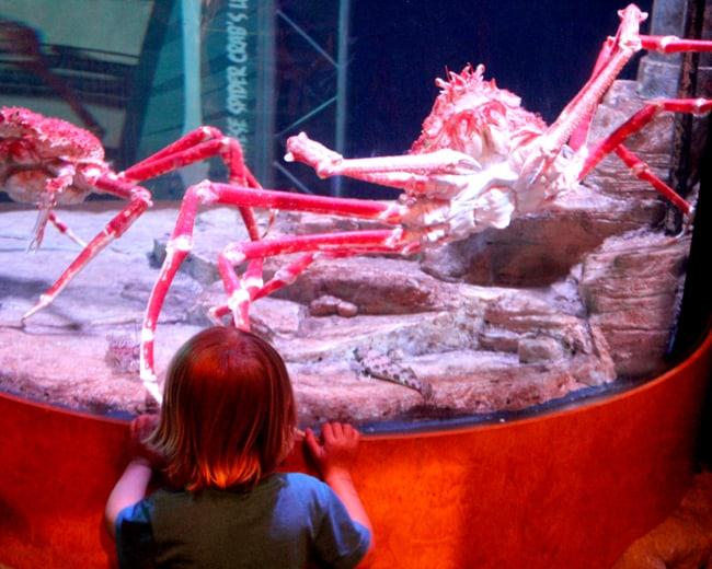 sea-life-legoland-giant-crab