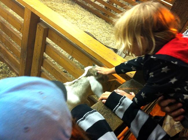 oc-fair-goats