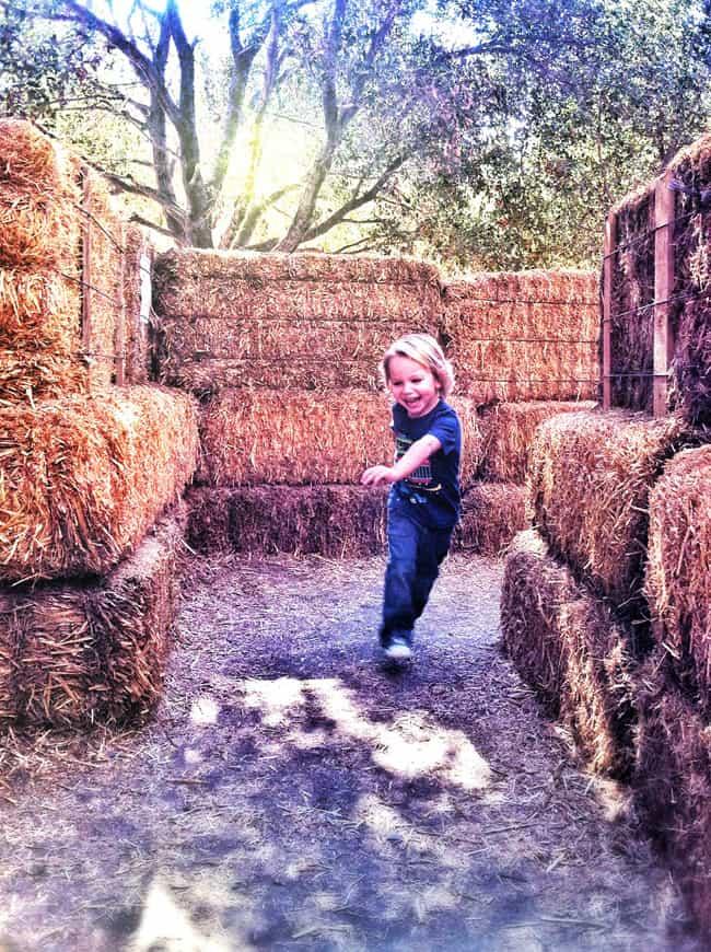 irvine-park-pumkin-patch-hay-maze