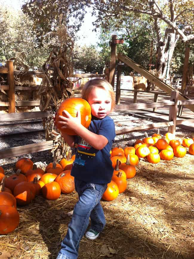 southern-california-pumpkin patch