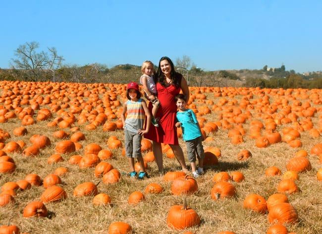 cal-poly-pomona-pumpkin-field