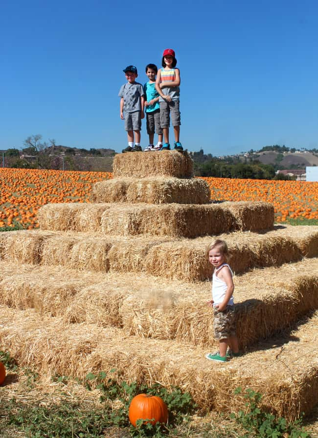 cal-poly-pomona-pumpkin-patch