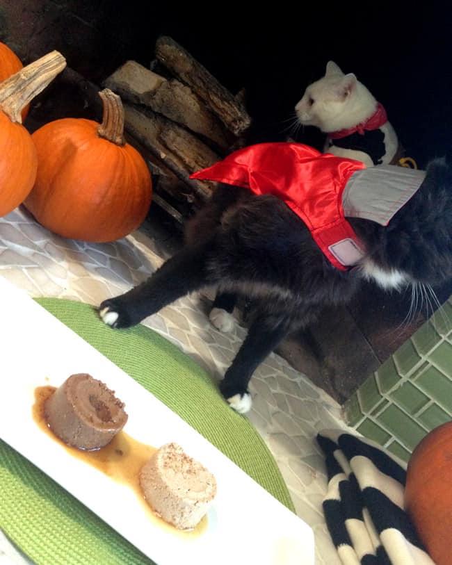 sheba-cat-food-halloween-costumes-#shop