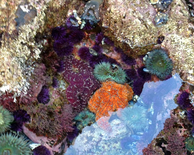 best-orange-county-tide-pools
