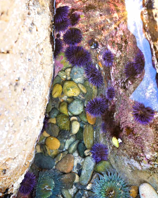 orange-county-tide-pools