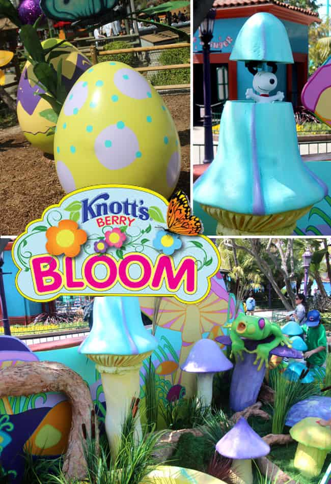 knott's_spring_berry_bloom_2014