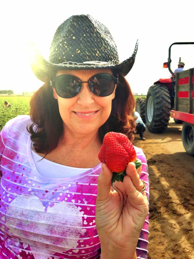 california-strawberry-farming