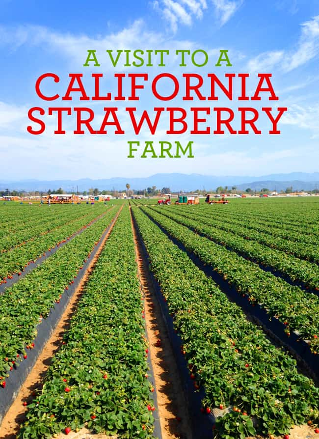 oxnard-strawberry-fields