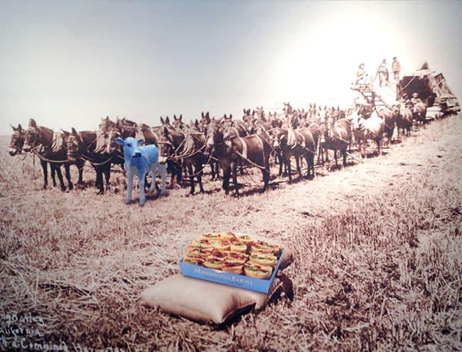 mendocino-farms-cow