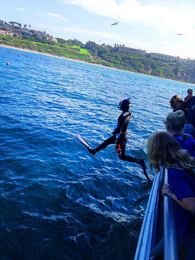 dana-point-reef-diving