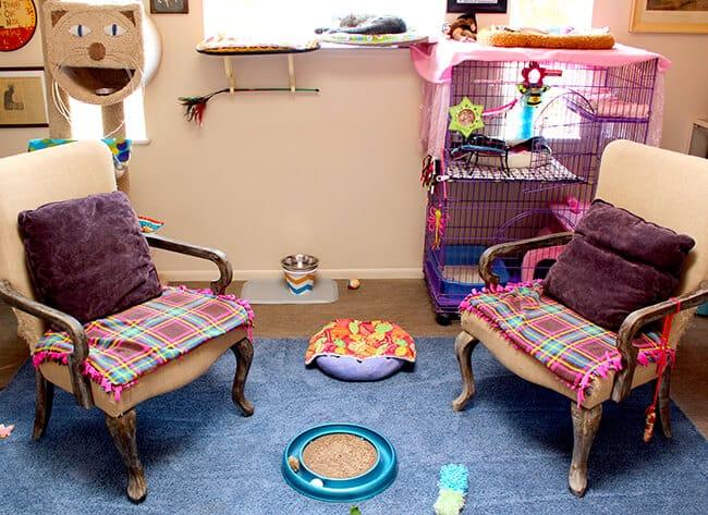 Best Friends Animal Sanctuary Cat World Rooms