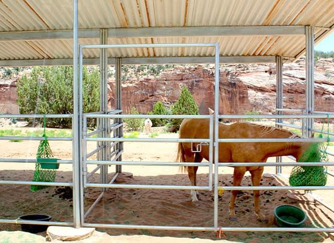 Best Friends Animal Shelter Horses