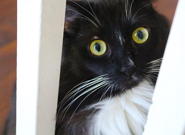 Cat Peeking Through the Stairs
