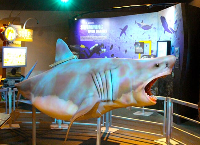 Discovery Cube National Geographic Shark