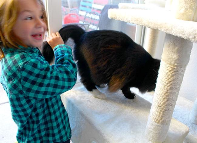 Popsicle Blog Kitties