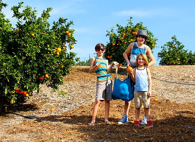 Farm Fresh Oranges in Orange County
