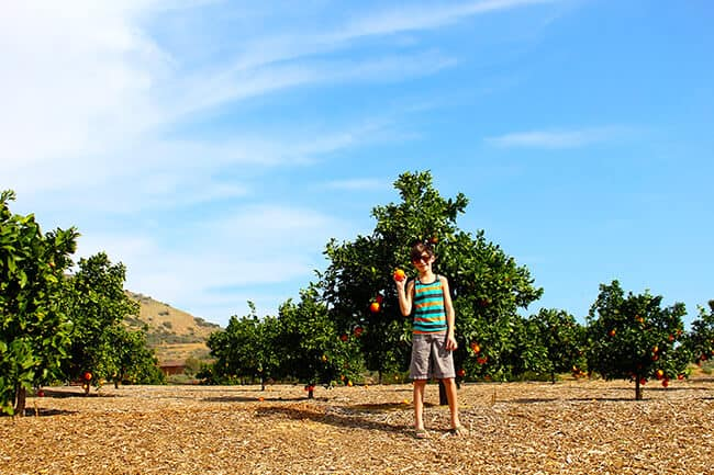 Kyle Parkin in an Orange Grove