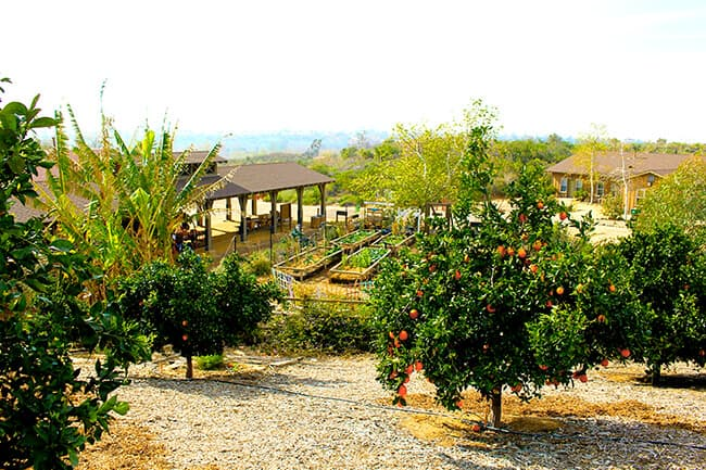 Landscape or IROEC Orange Grove