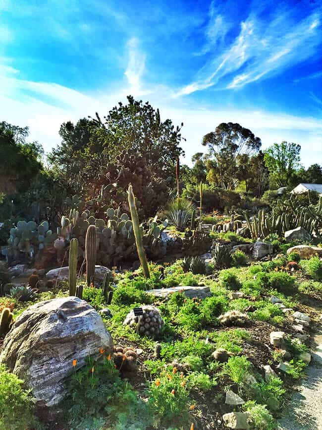 South Coast Botanic Garden Cactus