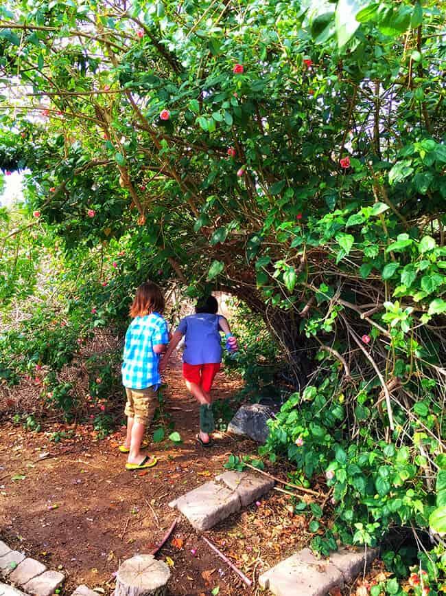 South Coast Botanic Garden Childrens Garden