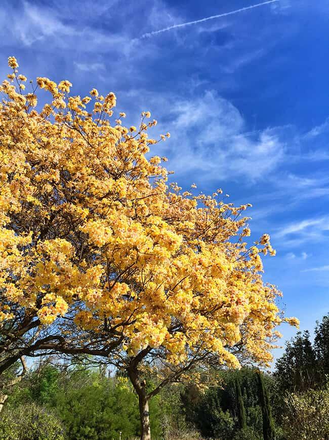 South Coast Botanic Garden Tree