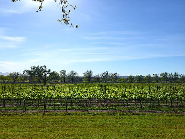 Bridlewood Estates Winery View