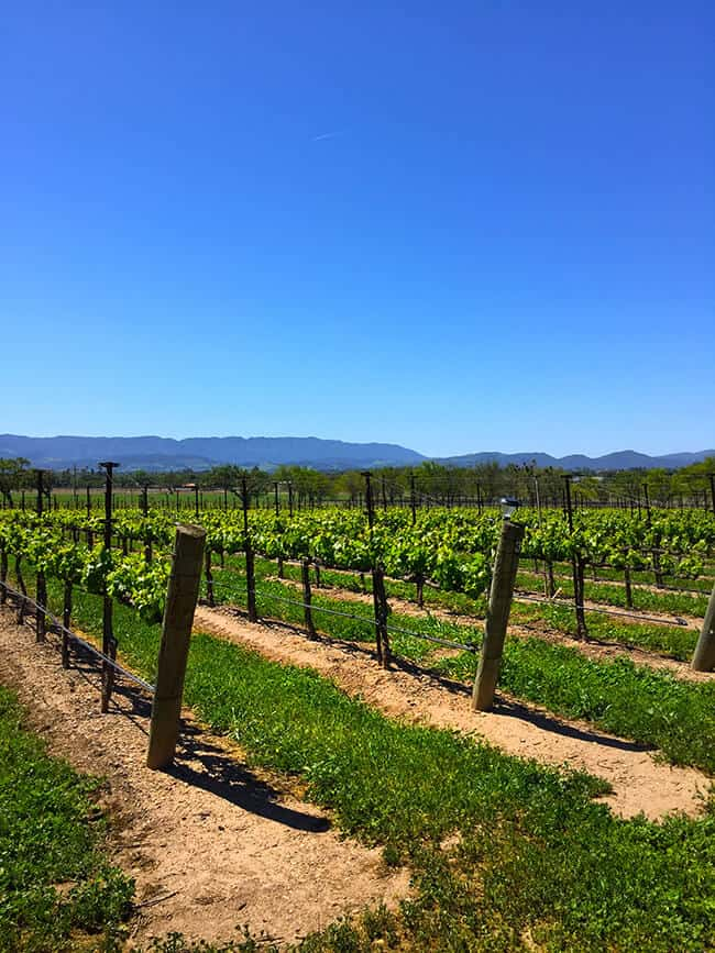 California Grape Vineyard