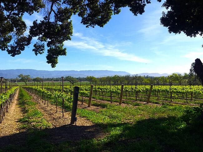 Grape Vineyards in San Inez