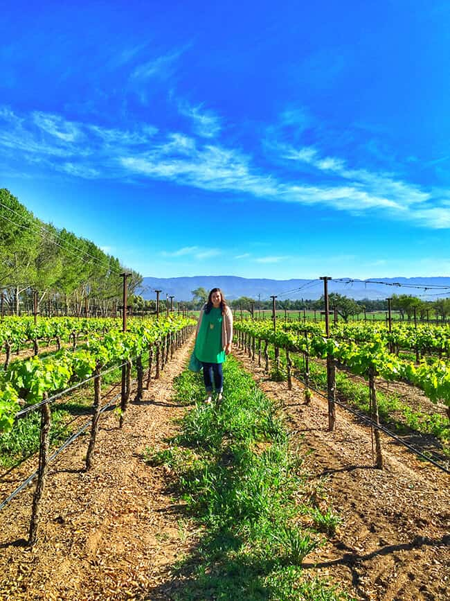 Popsicle Blog Standing in a Grape Vineyard