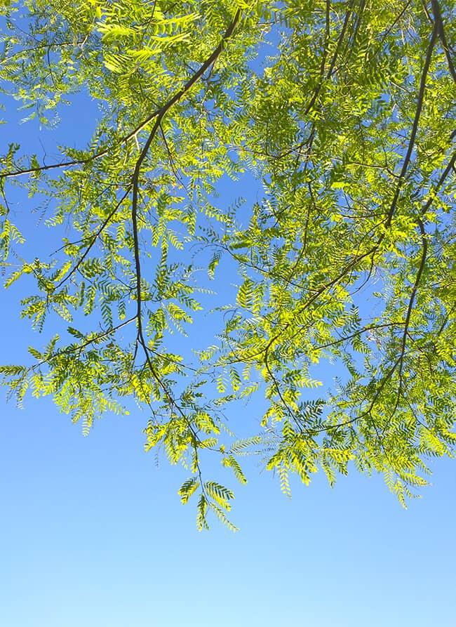 Blue Skies Smiling at Me