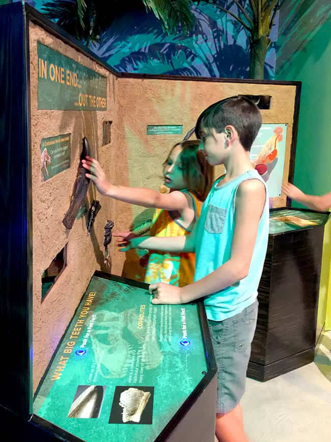 Dinosaur Education at Discovery Science Center