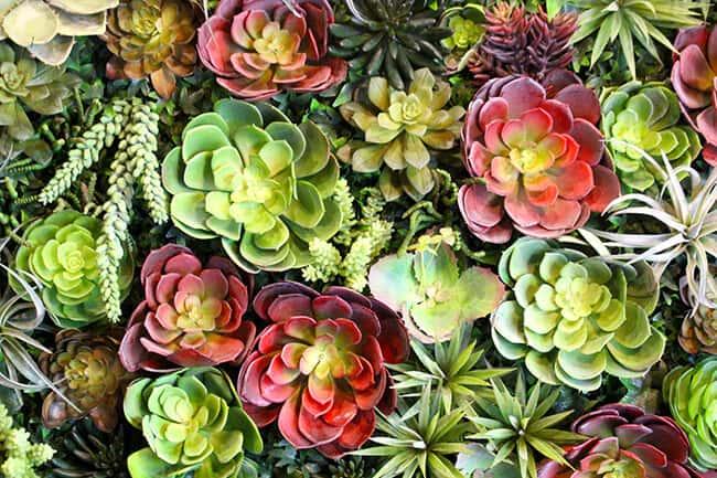 Knott's Succulents