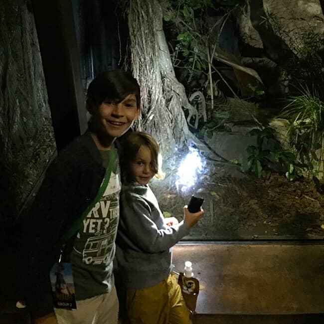 night_scavenger_hunt_at_the_san_diego_zoo