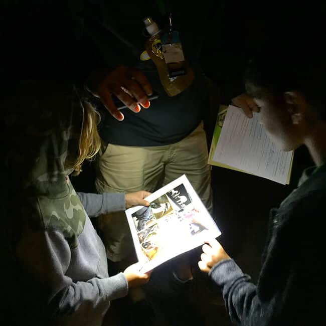 night_scavenger_hunt_san_diego_zoo