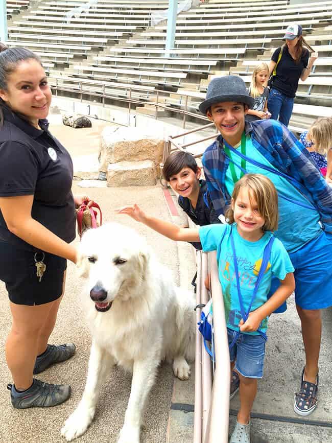 animal_companions_san_diego_zoo