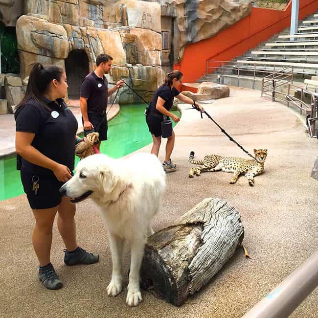 animal_friends_san_diego_zoo