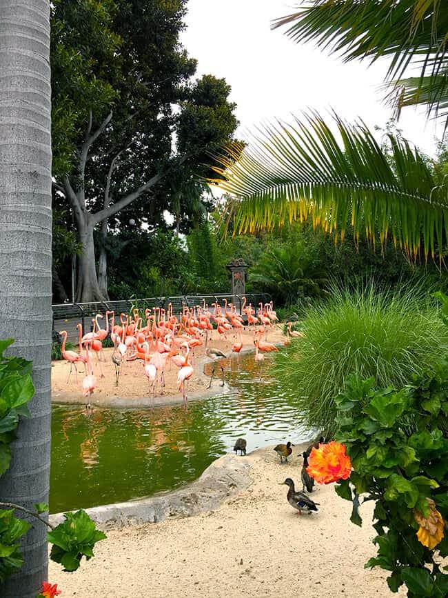flamingoes_san_diego_zoo