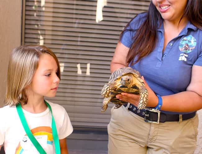 meeting_at_turtle_san_diego_zoo