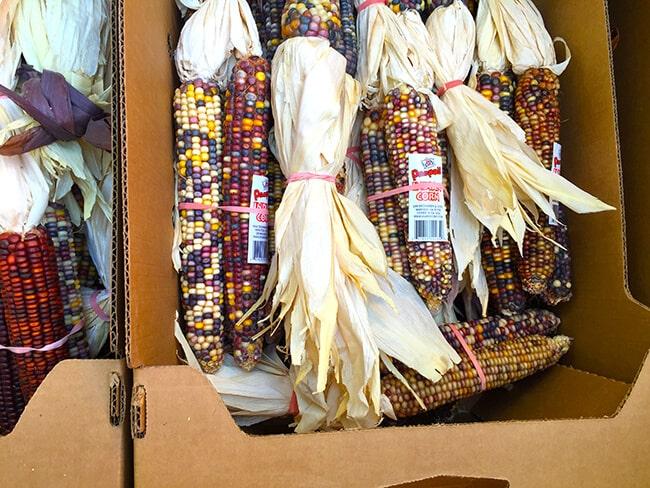 cal-poly-pomona-indian-corn