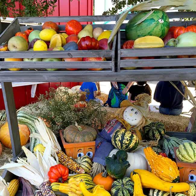 pumpkin-varieties-at-the-pomona-farm-store
