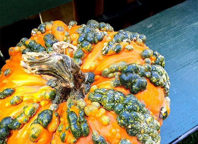Irvine Park Railroad Pumpkin Patch Gourds