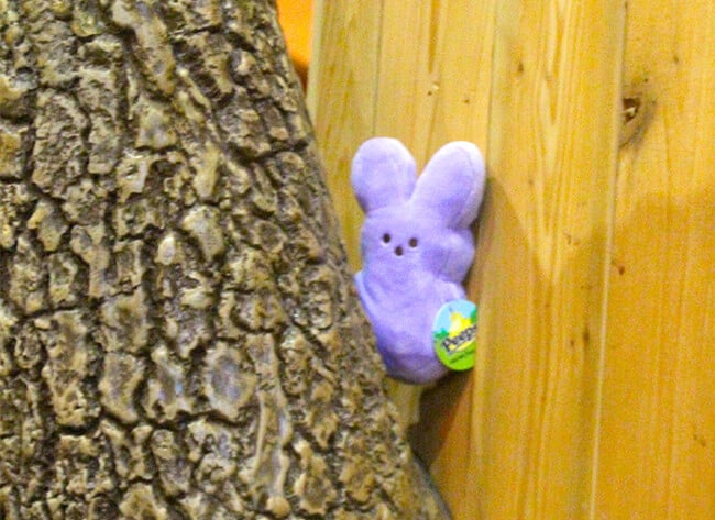 halloween_peep_hunt_great_wolf_lodge