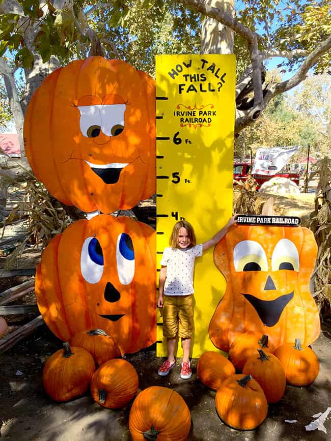 Irvine Park Railroad Pumpkin Patch How Tall Are You