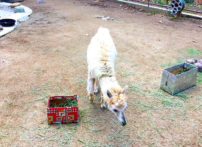 animals-at-rancho-las-lomas-orange-county