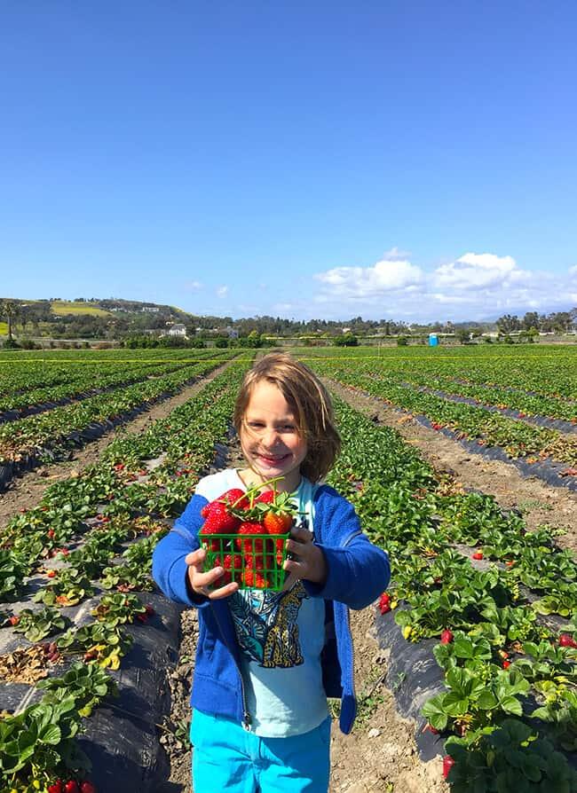 Strawberry Picking in San Juan Capistrano
