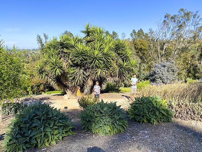 Niguel Botanical Preserve Pathways